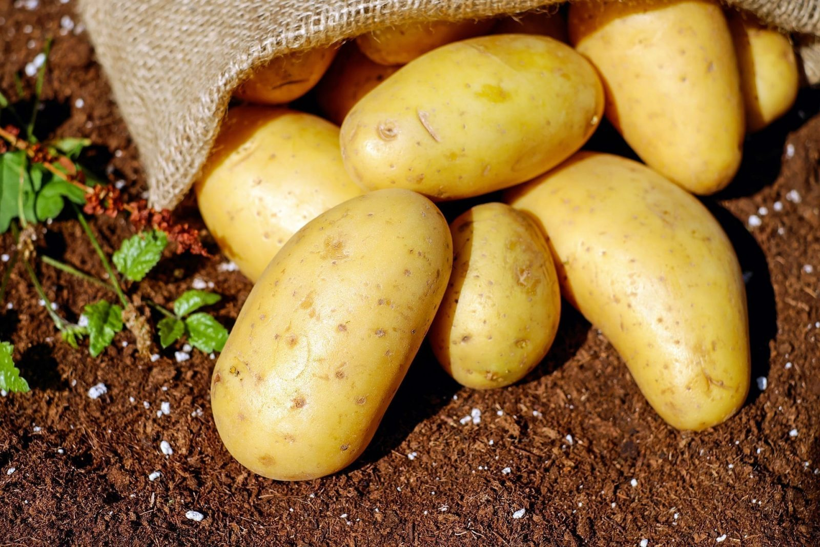 Belgische aardappelboeren op zoek naar grond in Noord-Frankrijk