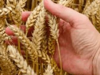 Nieuwe federatie FEGRA verdedigt belangen graanhandel