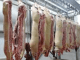 Europees alarm rond varkenspest