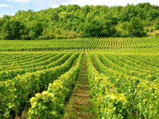 Les doux rêves de vins indiens des Belges d'AB InBev