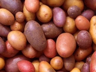 Wereldwijde aardappelsector zakt af naar Kortrijk