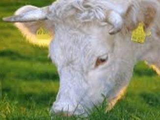Vleessector: 'We kunnen vlees Belgische winkels wel traceren'
