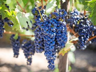Wijnpartnerschap voor Vinventions