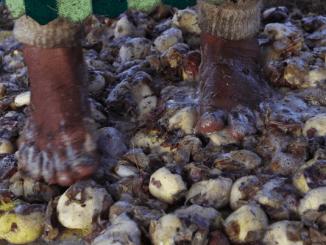 West-Vlaamse ondernemers ondernemen sociale missie naar de Peruaanse patat