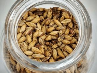 La Wallonie veut reintroduire l'orge brassicole