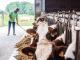 330 Inex-melkveehouders kiezen voor stabiele melkprijs