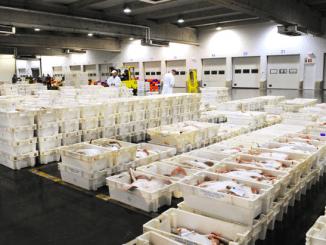 Laagterecord voor aanvoer Belgische vis in zeehavens