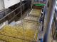 De sector van de diepvriesfrieten heeft het zwaar te verduren gekregen: een miljoen ton aardappelen zijn verloren gegaan