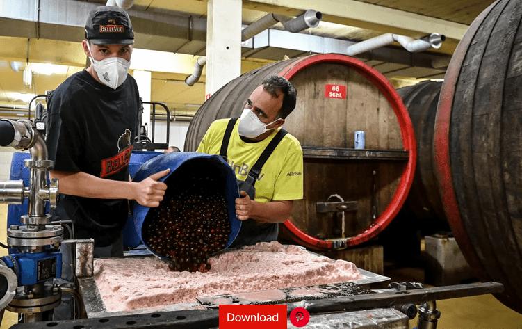 Krieken komen aan in brouwerij Belle-Vue in Sint-Pieter-Leeuw