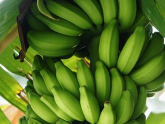 De Latijn-Amerikaanse producenten van bananen klagen nieuw standaards van RFA aan