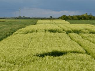 De voedselrevolutie: noodzakelijk, maar niet mogelijk zonder overheidssteun!