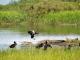 Verlies biodiversiteit betekent hoger risico op ziektes