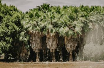 Zeelandia overtuigde leveranciers om resoluut te kiezen voor duurzame palmolie