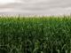 Bezit u een goede kijk op onze voedselvoorziening? Schrijf dan mee aan nieuwe het verhaal 'Vlaamse Kost'