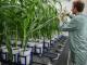 VIB neemt CropDesign over van BASF en lanceert eerste agrobiotech incubator